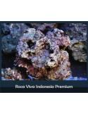 ROCA VIVA INDONESIA PREMIUM ACUARIO MARINO 5KG+